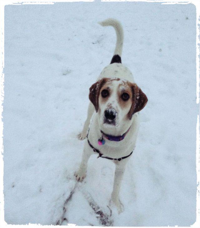 snowdaisy